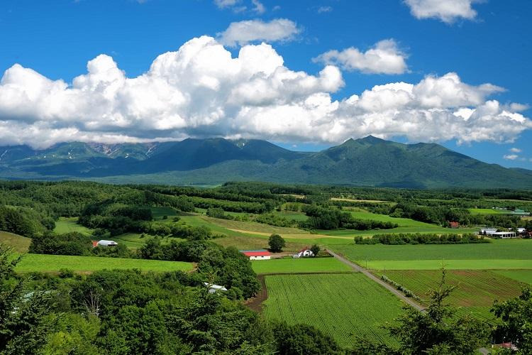 country-konkatsu